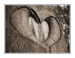 treeheart.jpg